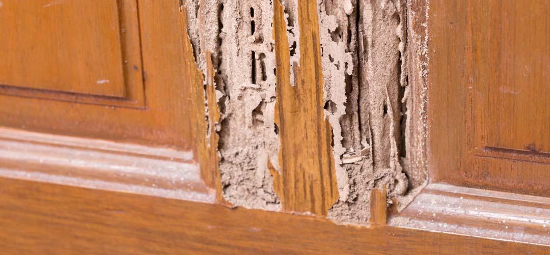 Eliminación termitas muebles