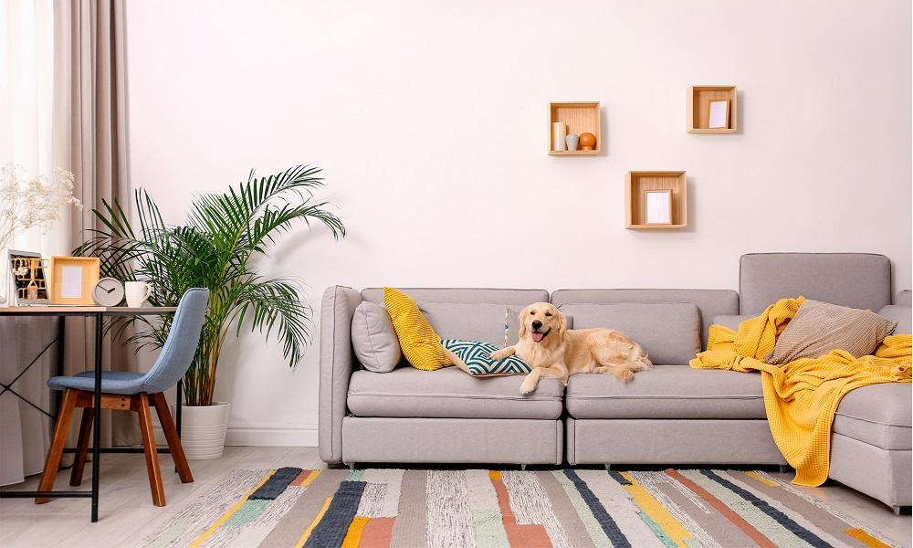 Protector de muebles para perros y animales